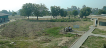 Tree plantation in the campus